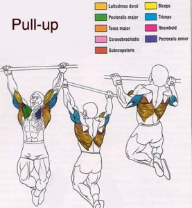 How to Do Five Pull Ups - Shawna K